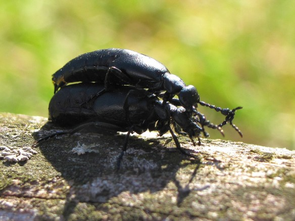 A great (SHINY!) start to the bug season! | The Bug Geek