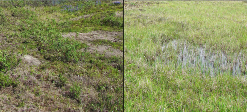 Dry tundra (left) and wet sedge meadow (right)