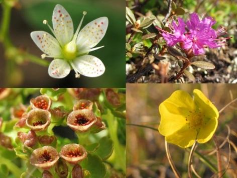 Kug flowers